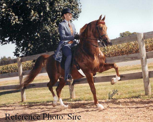 Reference Photo -  Sire